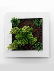 Fashion Light Green Succulent Plants Decorated Wall Hanging