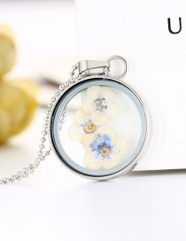 Fashion Small White Flowers Transparent Round Botanical Dried Flower Necklace